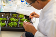 Researchers Reveal Plant Defense Toolkit and Insights for Fighting Crop Diseases