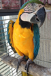 Pet Birds Require CITES Permits for International Relocation