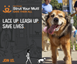 Best Friends Animal Society's Strut Your Mutt Returns: 12 Cities Nationwide Plus Strut Your Mutt Day, So Lace Up, Leash Up, Save Lives