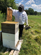 Honey Frame with Bees, Photo Credit Lincolnshire Marriott Resort