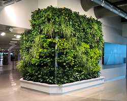 The lush, vibrant green wall at Appleton International Airport.
