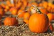The Ritz-Carlton, Half Moon Bay Debuts Specialty Pumpkin Experiences in the Pumpkin Capital of the World