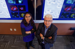 Drs. Shipra Gandhi and Pawel Kalinski will lead a Department of Defense-funded clinical trial assessing a three-pronged immunotherapy strategy for metastatic breast cancer.