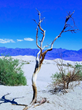 Death Valley tree in the desert
