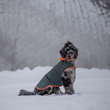 American Pet Products Association Announces Products to Help Pets This Winter