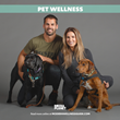 Mediaplanet and Jessie and Eric Decker Team Up to Discuss the Importance of Pet Wellness