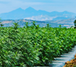 Hemp Starts Here: Colorado Hemp Connection Becomes Alterra Hemp