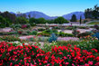 Visit Temecula Valley Lists Top Things to Do This Spring in Temecula Valley Southern California Wine Country