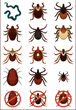LivLyme Introduces Tickmojis in Fight Against Tick-Borne Illness