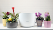 Riego, The Smart Indoor Plant Irrigation System, Launches on Kickstarter