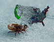 Pest Control Expert Projects Uptick in Tick Season