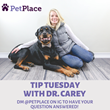 PetPlace.com Launches Instagram Live Series: Tip Tuesday with Dr. Carey