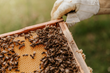 Odd Year for U.S. Beekeepers Who Reported Lower Winter Losses but Abnormally High Summer Losses