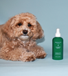 New Dry Shampoo for Dogs Offers 100% Natural Cleansing Formula for Dog Owners