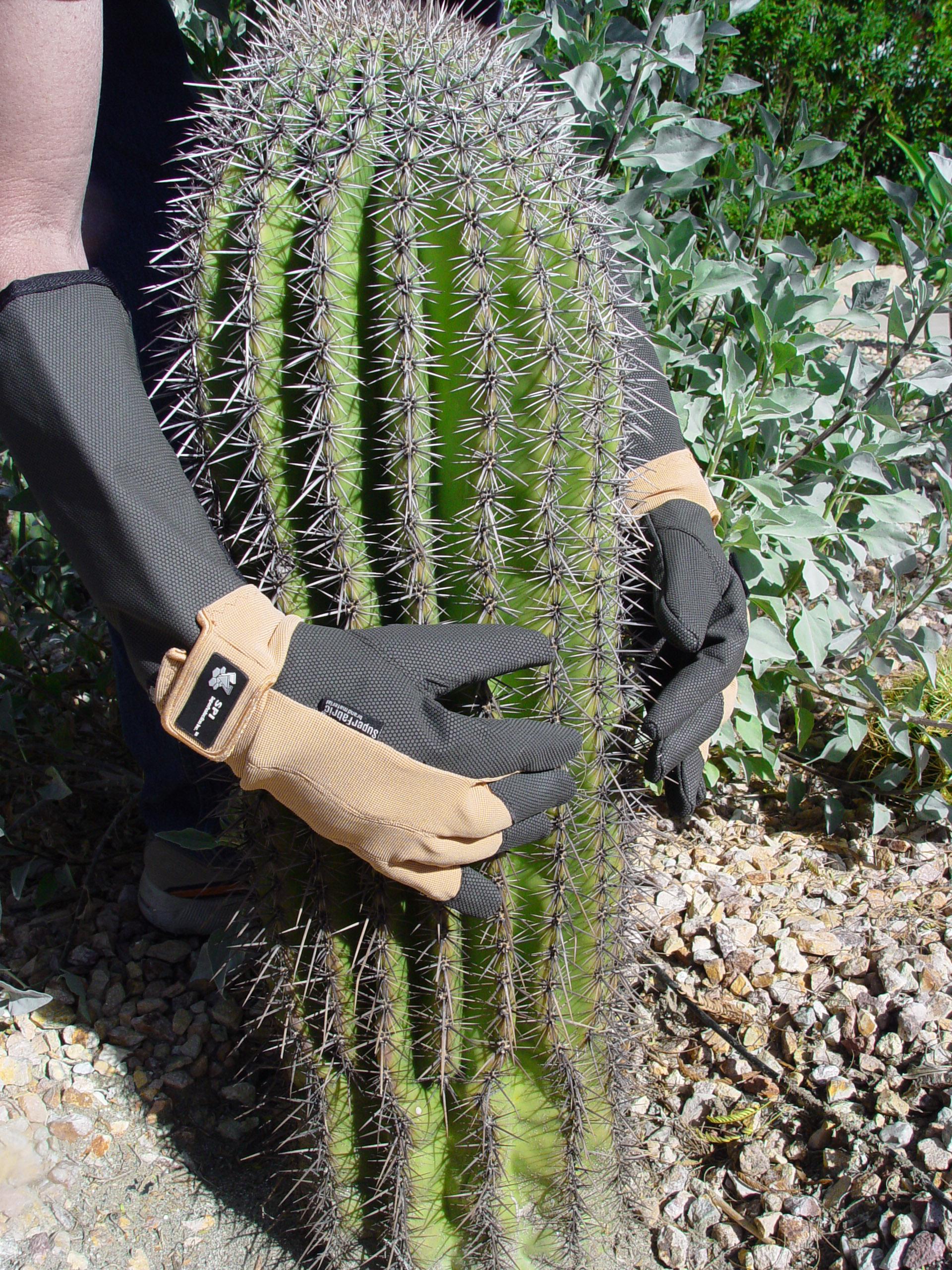 Le premier gant vraiment résistant aux épines