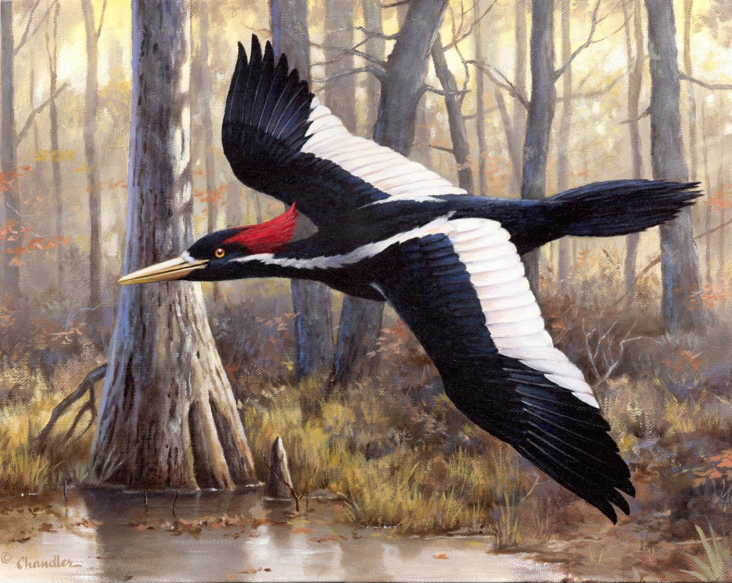 Ivory Billed Woodpecker Conservation Stamp amp Print to
