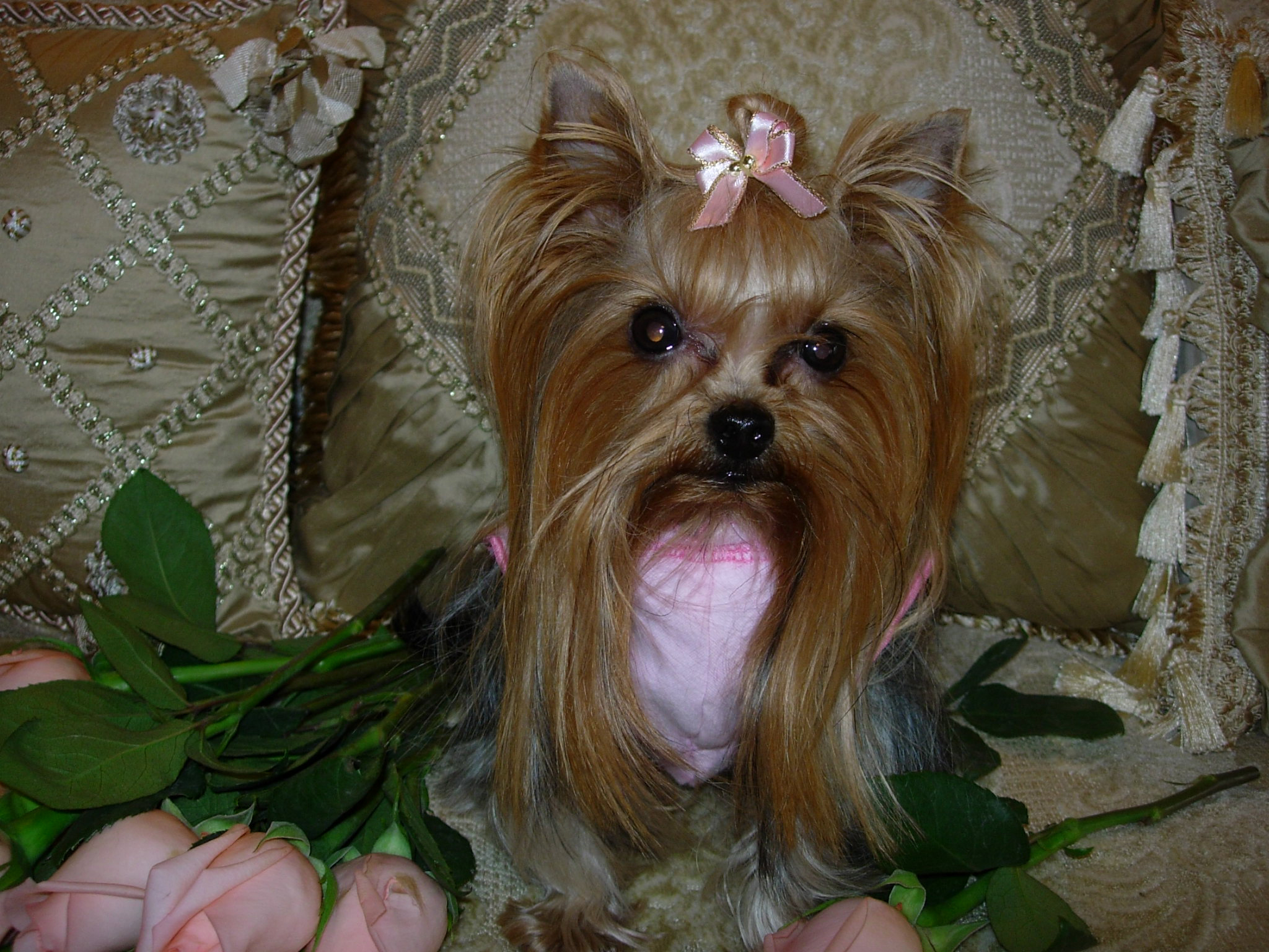 America S Most Pampered Pup Contest Announces Winner