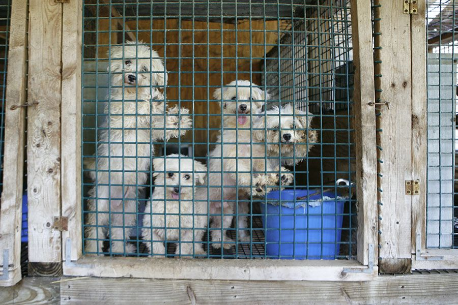 End Of The Line For Backwoods Puppy Mill In West Virginia