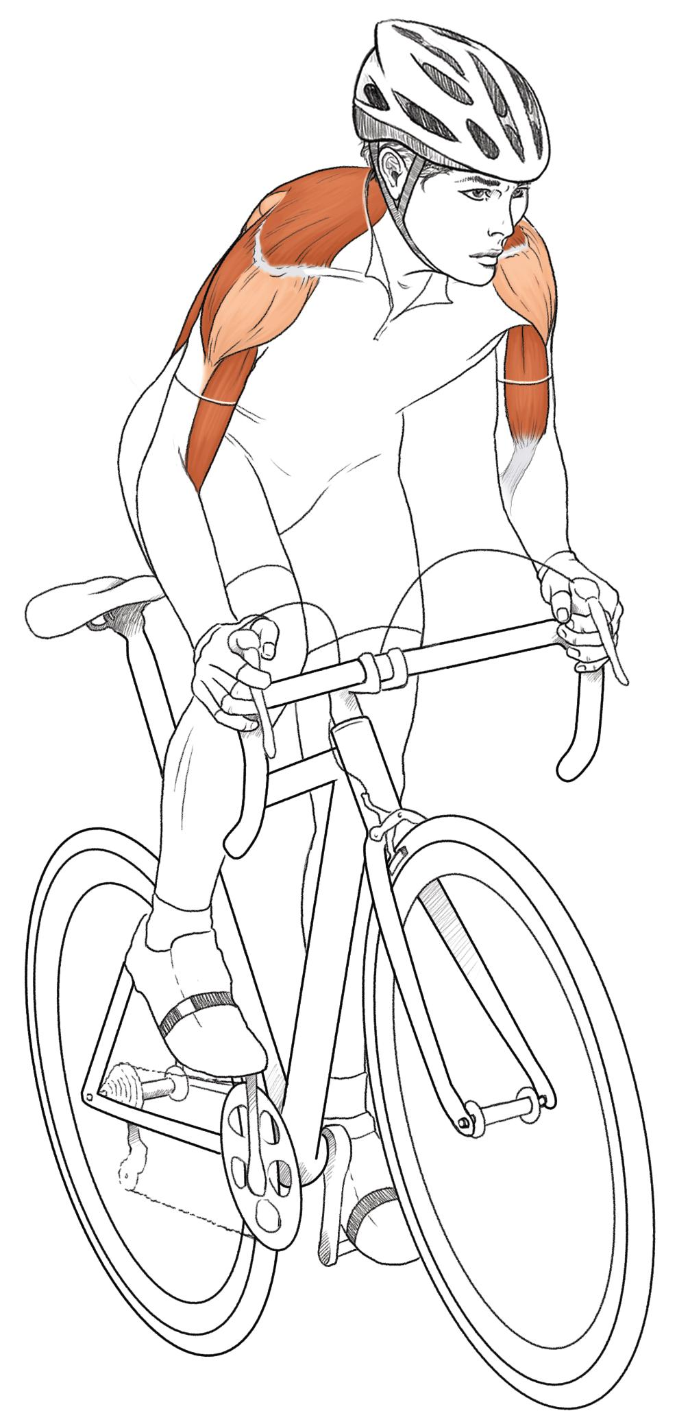 Cycling Anatomy Depicted in New Book: Illustrations Show How Body ...