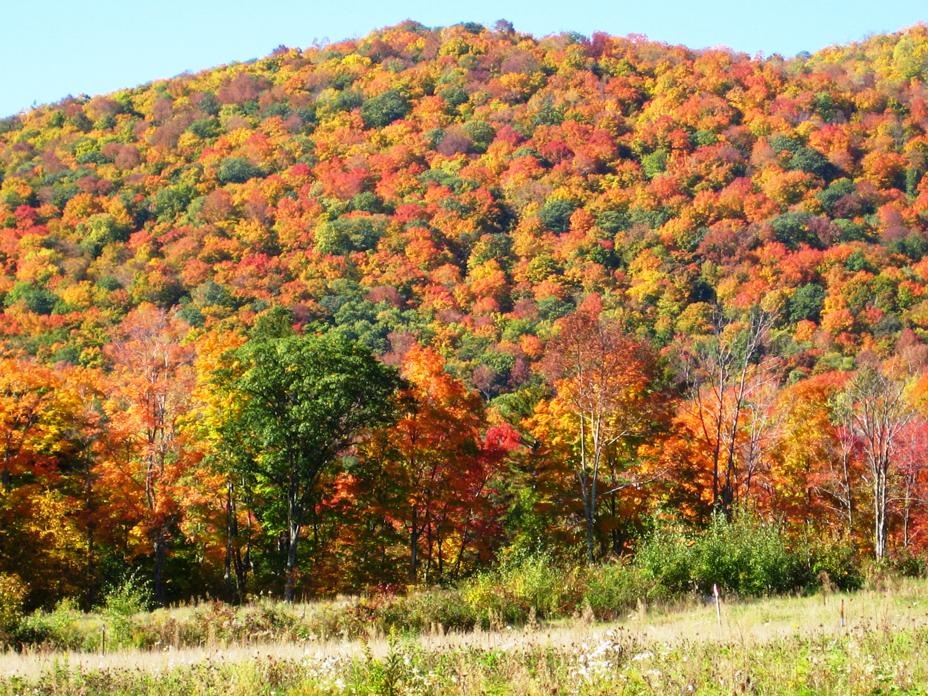 Vermont U0026 39 S Premier Hiking Spa Is Excited The Fall Foliage