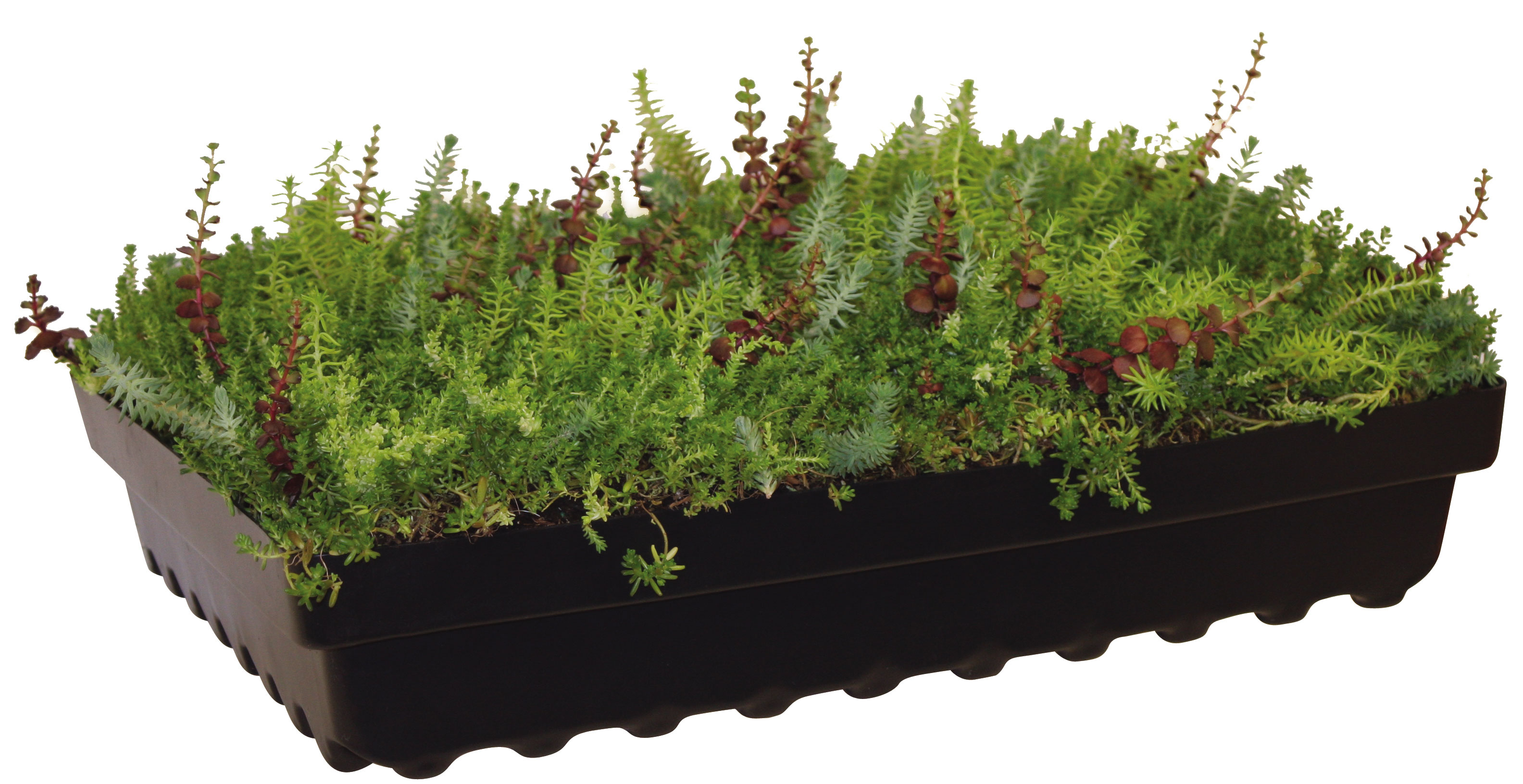 Hydrotech Announces Two Additions To Garden Roof Assembly
