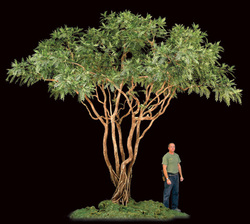 commercial silk int'l creates cad drawings of silk plants and Silk Plants and Trees
