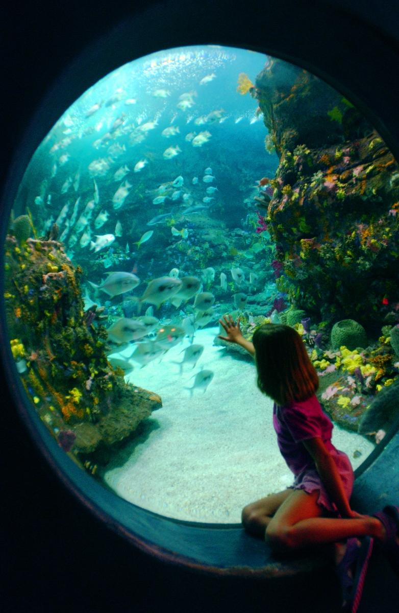 Kure Beach Pier N C Aquarium At Fort Fisher