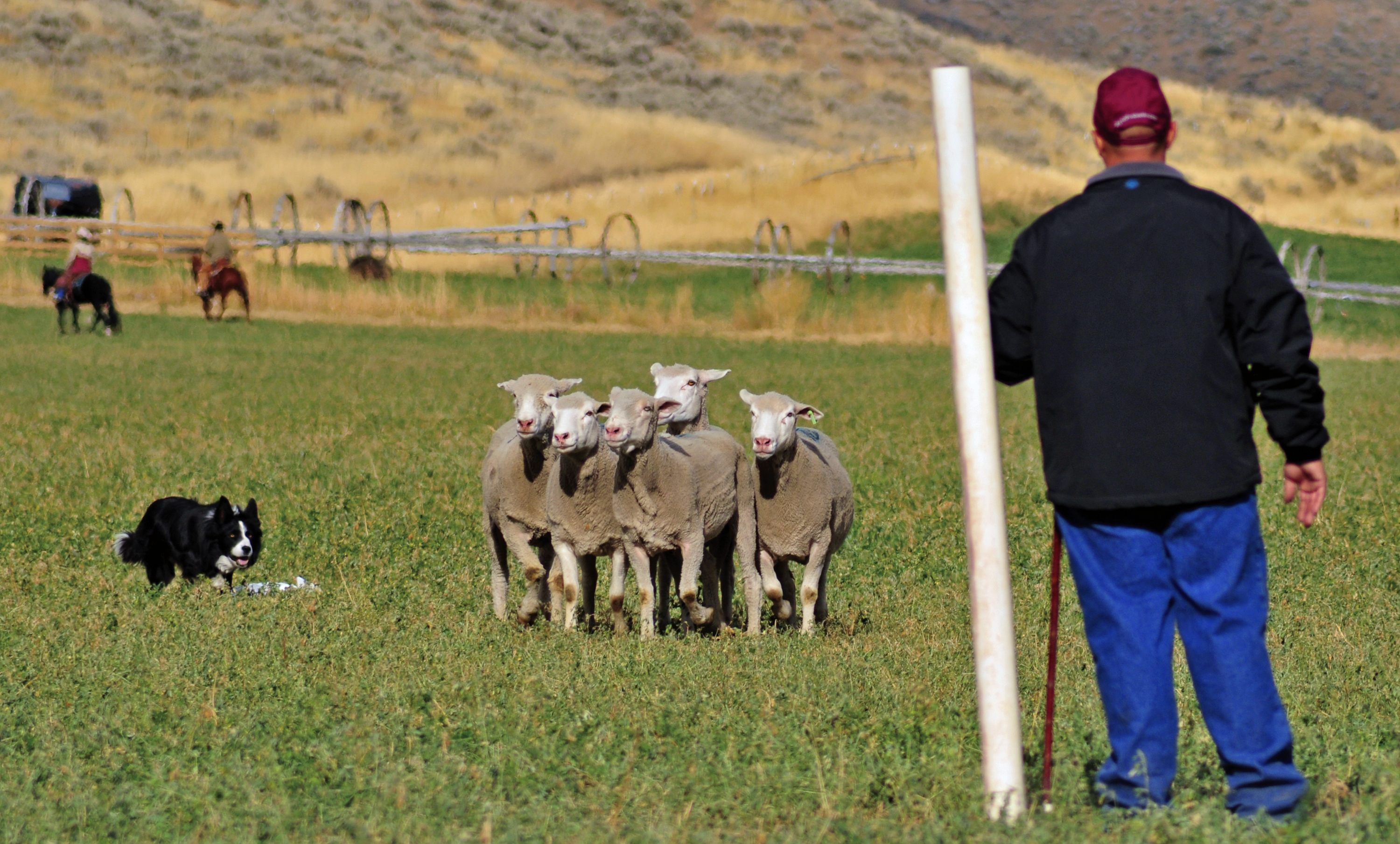 West S Champion Sheepdog To Compete In Soldier Hollow