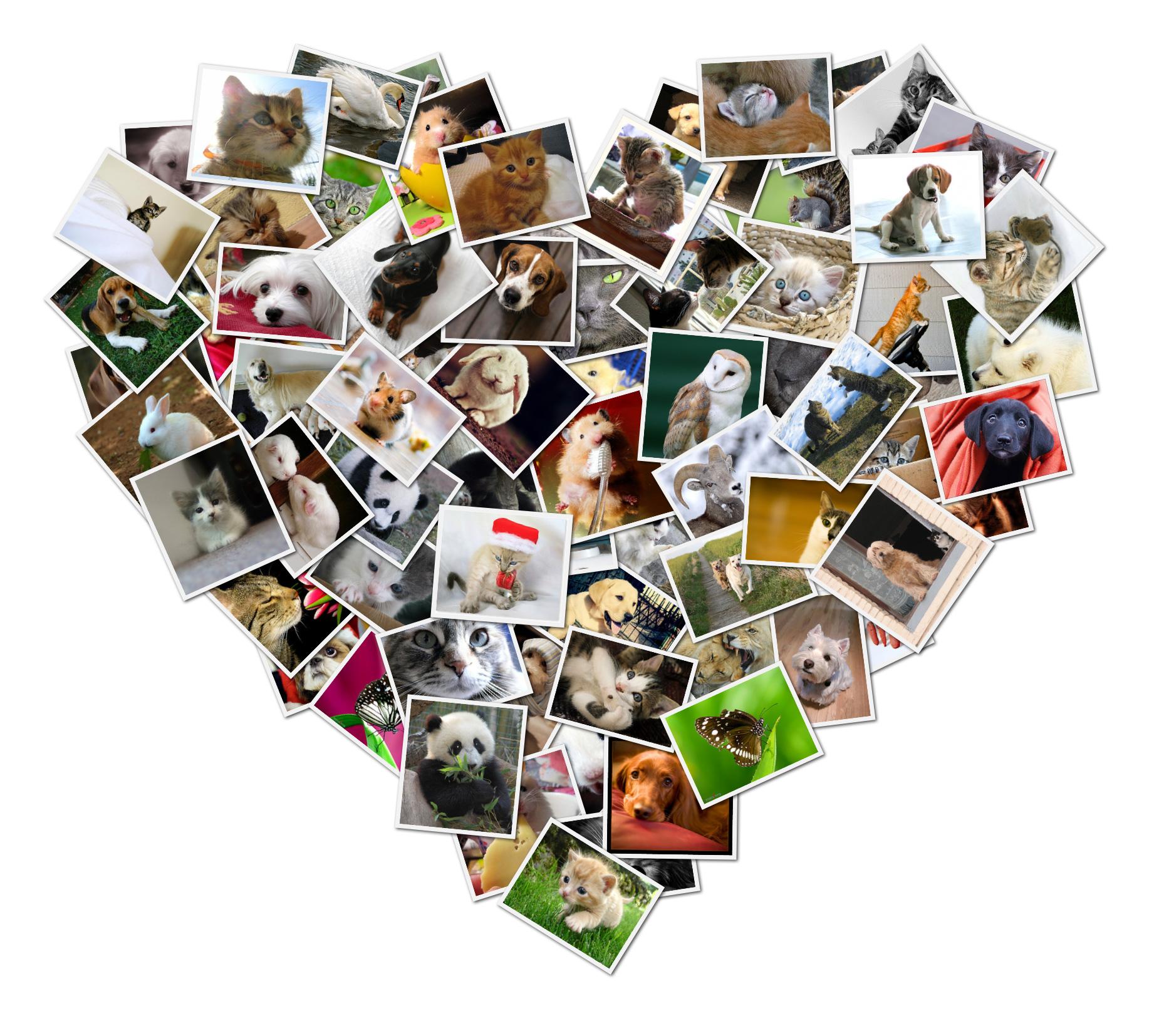 collage heart shape shapecollage create digital
