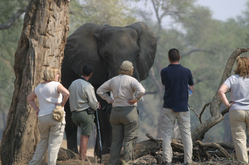 hills of africa travel plans family safaris for great