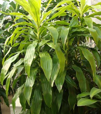 on variety of houseplants