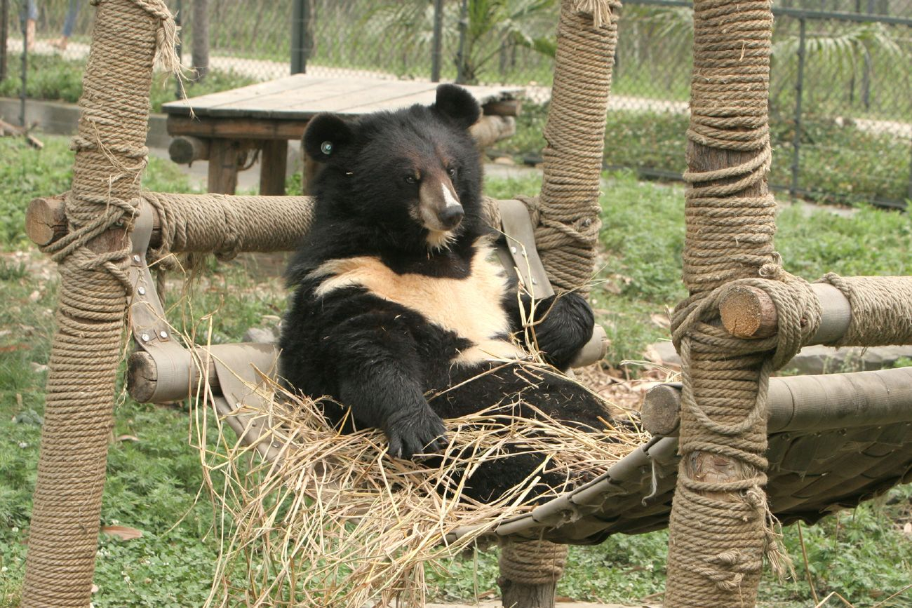 saving asia 39 s moon bears and sun bears conservation speaker series at oakland zoo featuring. Black Bedroom Furniture Sets. Home Design Ideas