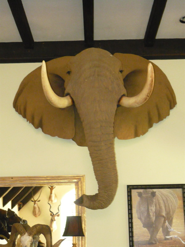 Second Largest Cape Buffalo Mount Among Items Available At