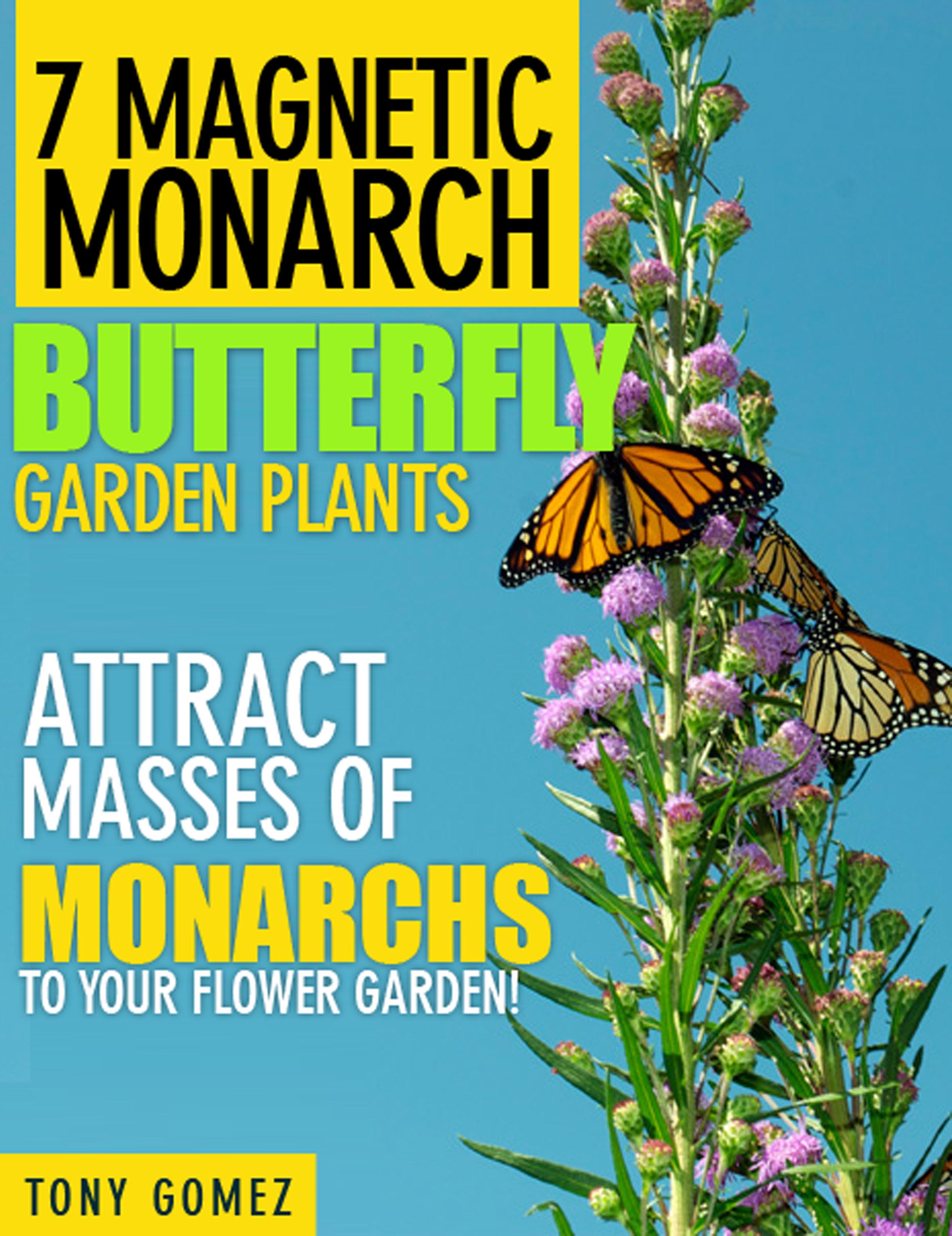 A Dangerous Decline In Butterflies Start Your Monarch