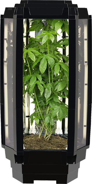 Aspiring Chef Wins Indoor Growing System Grand Prize In