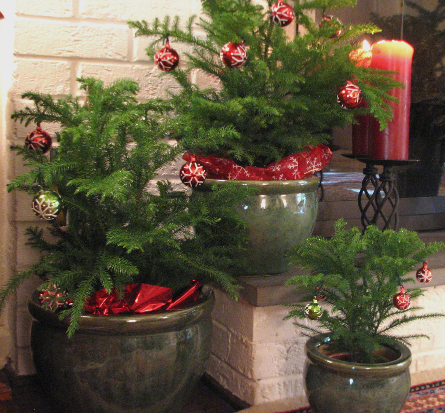 Christmas Trees Norfolk: Decorate With Live Mini Christmas Trees This Holiday Season