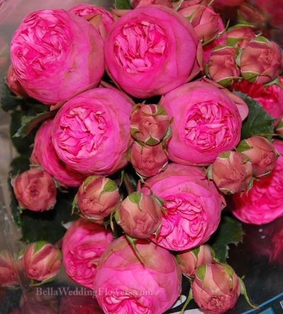 Garden Rose Piano