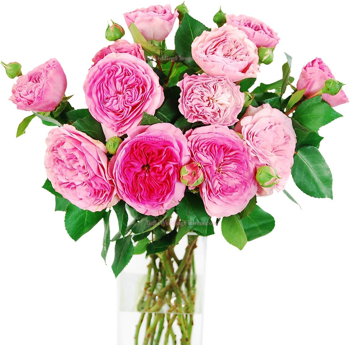 Pink Baroness Garden RosesA Beautiful Pink Garden Rose!