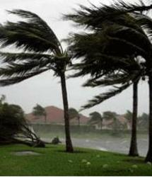 Photograph of palm tree in a tropical storm