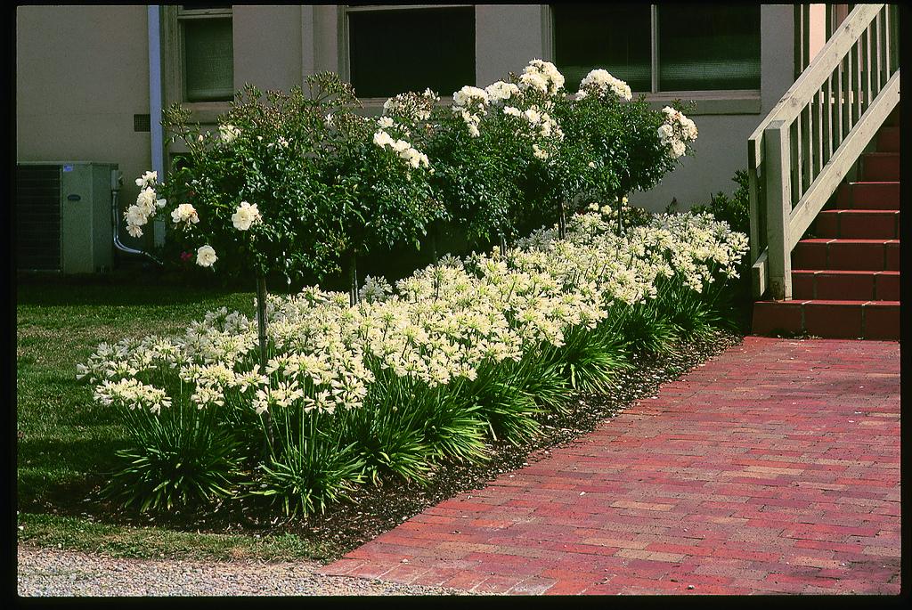 Tesselaar Plants Provides Earth Day Tips
