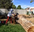 Tree Pruning Denver - Bee Colony Relocation - Swingle