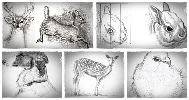 Drawing animals in pencil