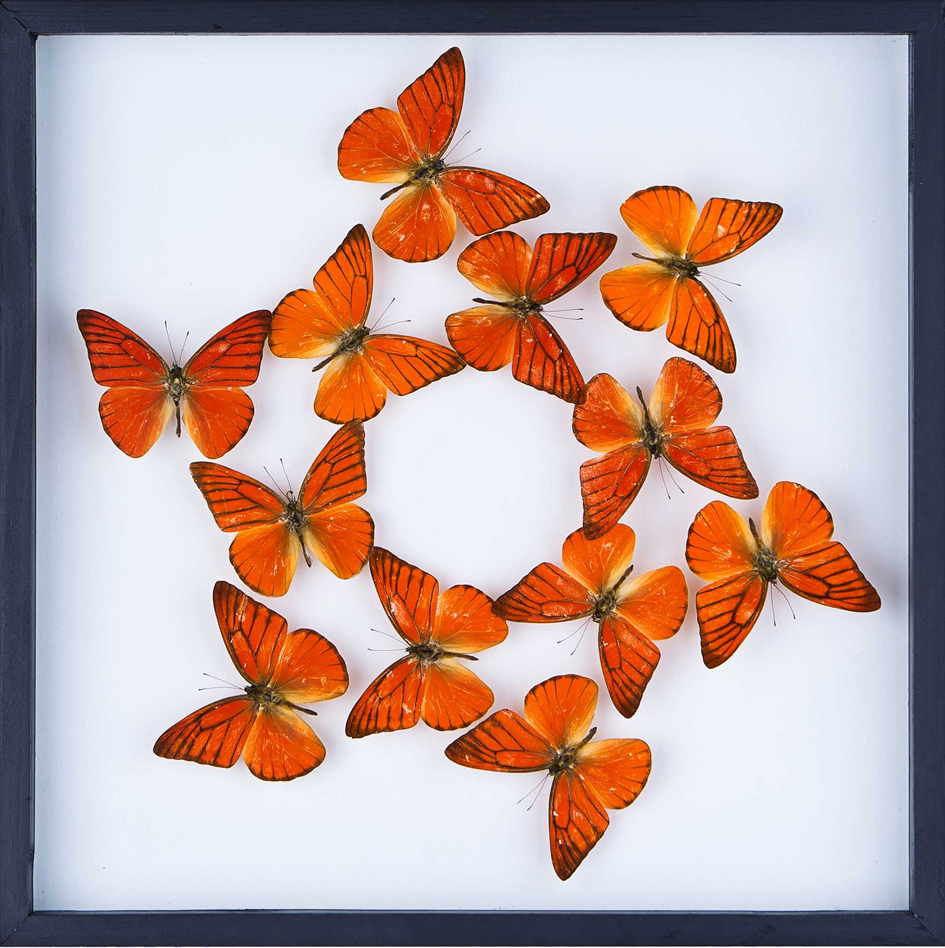 Exotic Gifts: Butterfly Taxidermy, Framed Insects ...