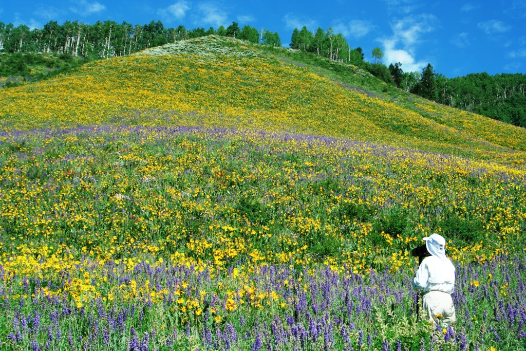 3faf8c9a7 Crested Butte Wildflower Festival Celebrates Nature s Colorful Palette