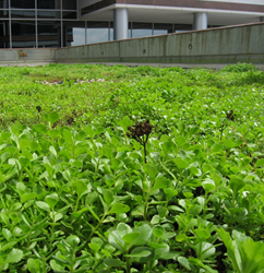 Metrotop Plaza Associates Installs Xero Flor Green Roof
