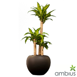 Ambius Has Recently Launched An Online Catalogue To Showcase Their Indoor Plants Offering And Ist Clients In Selecting The Correct For