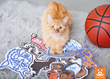 Best Friends Animal Society, adoption, dog, cat, basketball, march madness