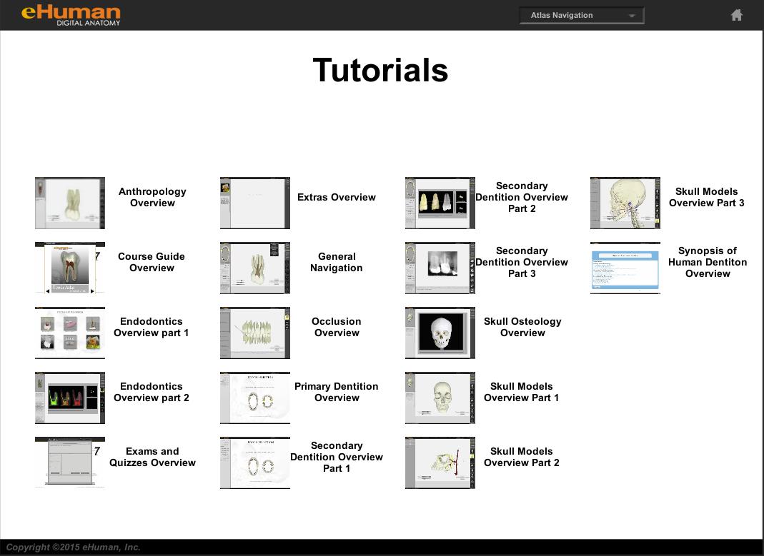 eHuman Digital Anatomy Releases 3D Tooth Atlas version 7.6
