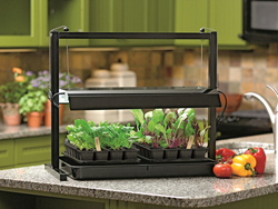 Grow Lights Help Provide The Greatest Harvest When Growing Tomatoes And Other Fruiting Plants Indoors