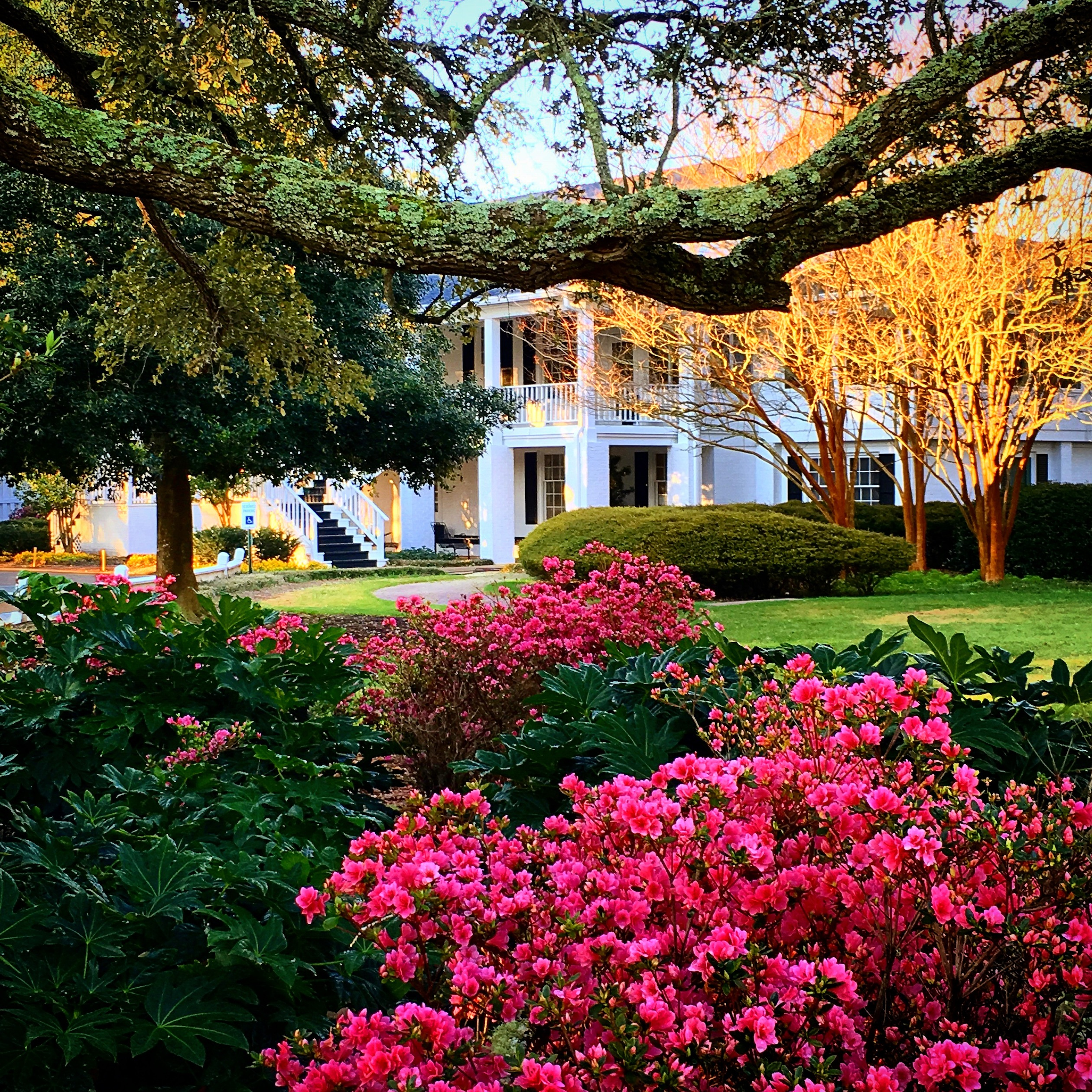 Myrtle Beach S Azalea Package Puts Golfers On Three Courses Known For Spectacular Blooms And Clic Golf Challenges